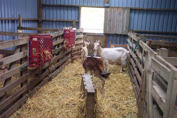 Southern Oregon Soay Sheep Farms: Shelter and Fencing