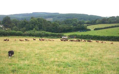 Southern Oregon Soay Sheep Farms: Beginners Guide to Care of
